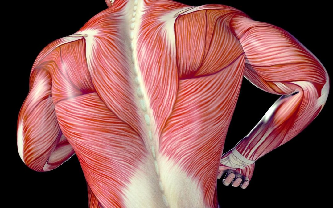 The Top Benefits of Fascial Stretch Therapy